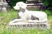 Img cementerio perrospeque a