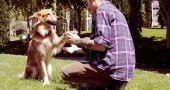 Img chico perro