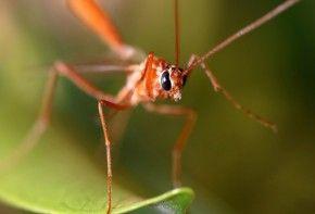 Img chikungunya mosquito