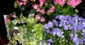 Img clasificacion plantas list