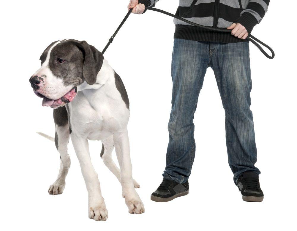 Img collares adiestramiento perros peligrosos
