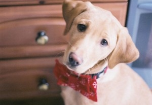 Img collares perros hechosencasa mascotas animales art