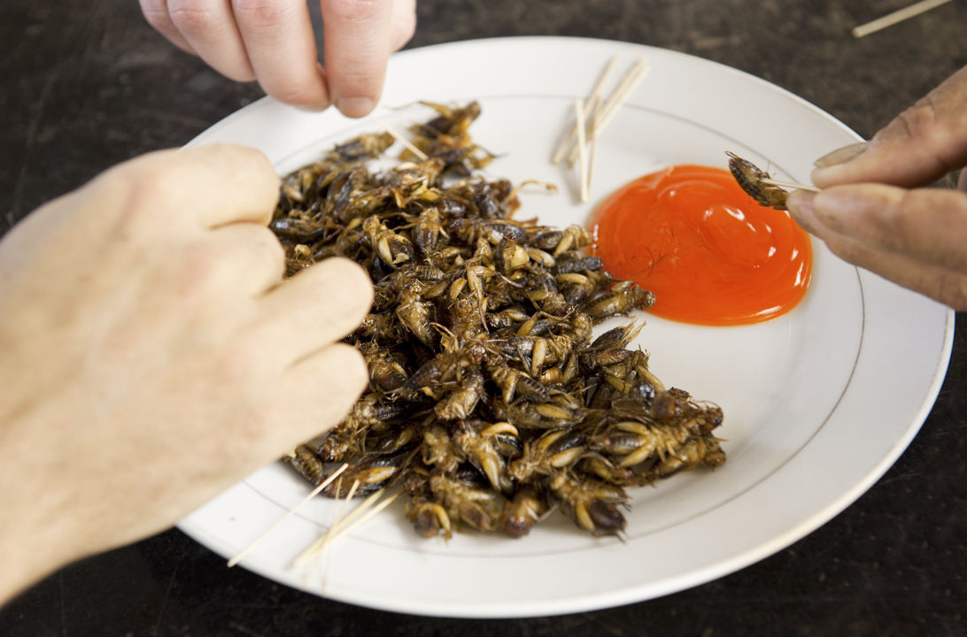 Img comer insectos ley hd