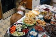 Img comida navidad perro sobras restos listado