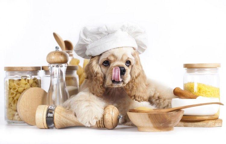 Img comidas humanas para perros seguras2 art