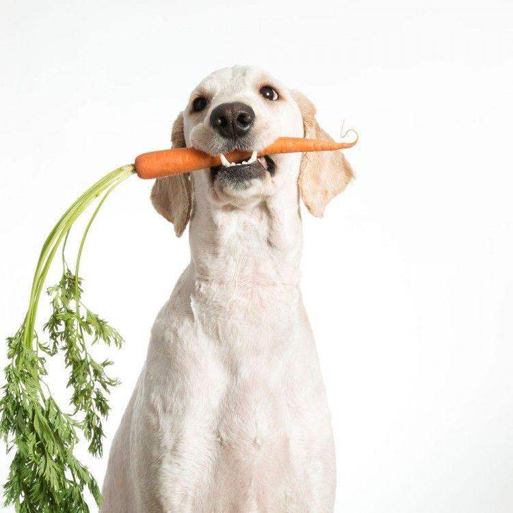 Img comidas humanas para perros seguras3 art