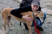 img_como educar perros positivo mascotas animales listado
