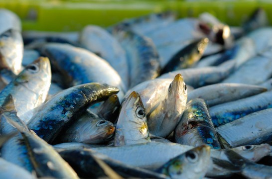img_consumo pescado listg_