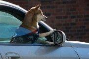 img_contaminacion ambiental perros salud peligros animales atmosferica polucion ciudades listado