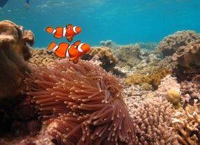 Img coral australia