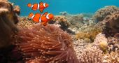 Img coral australia hd