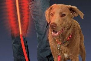 Img correas luz luces canes perros art