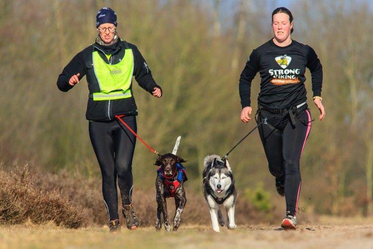 Img correr perros como 2 art