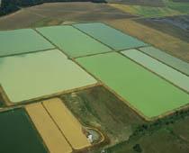 Img crop