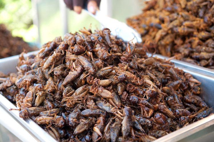 Img cucarachas comida
