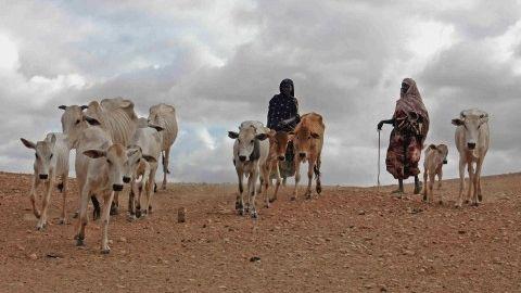 Img cuerno africa articulo