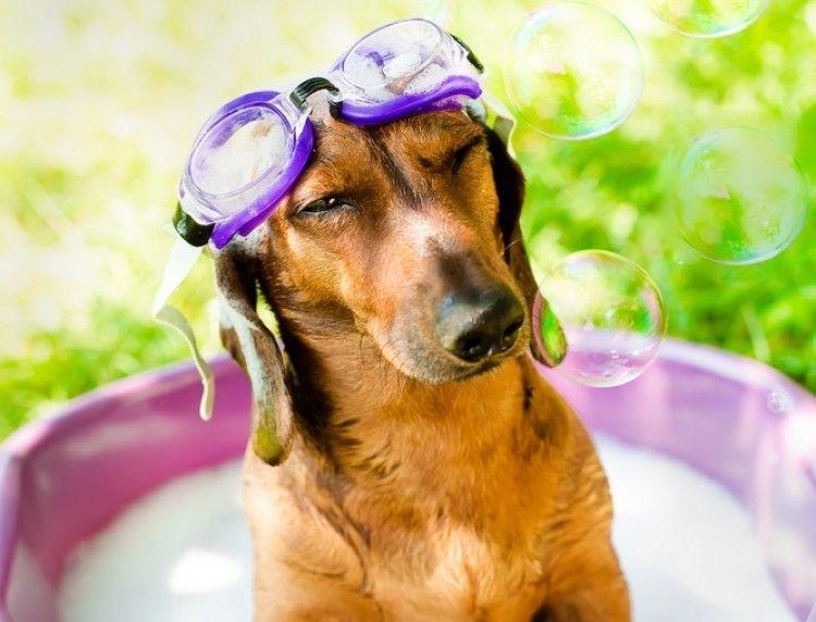 Img cuidados perros verano art