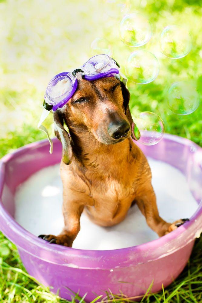 Img cuidados perros verano