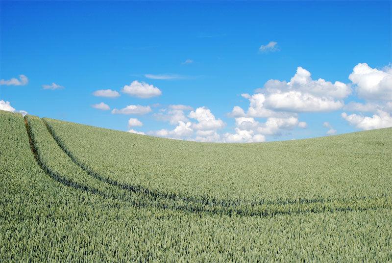 Img cultivo