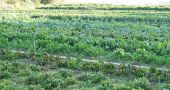 img_cultivo ecologico hd_
