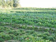 Img cultivo ecologico1