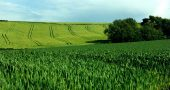 Img cultivos