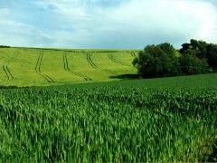 Img cultivos1