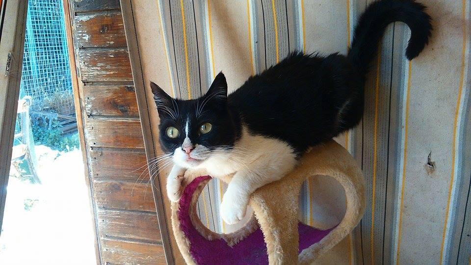 Img daya requiel gatos