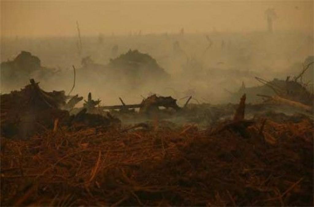Img deforestacion hd