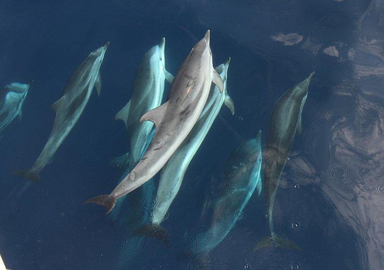 Img delfines listados