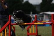 img_deportes perros listado