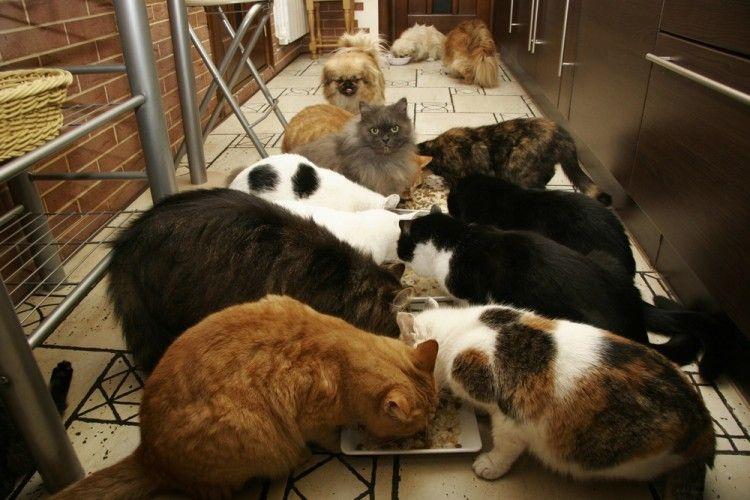 Img dia internacional perros gatos abandonados art