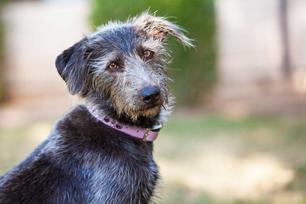 Img dia perros sin raza 2016