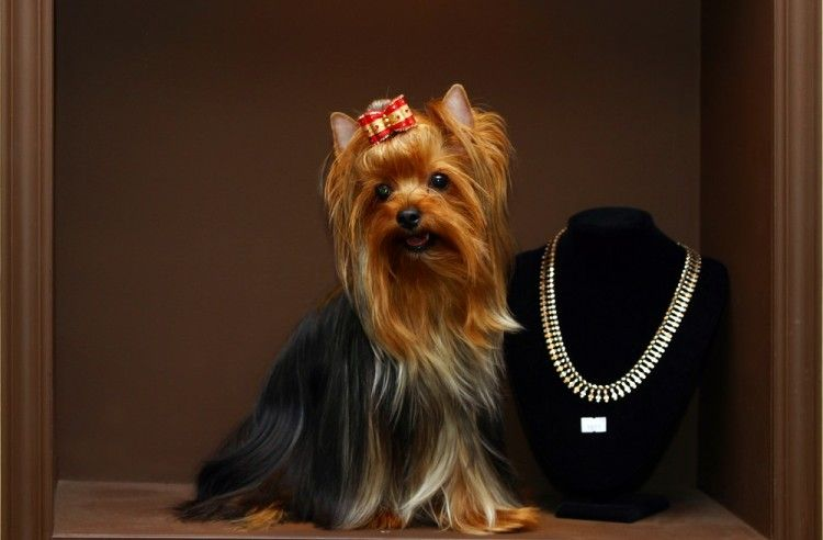 Img diamantes perros gatos art
