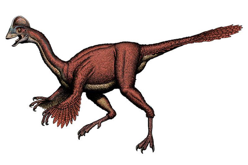 Img dinosaurio pollo hd