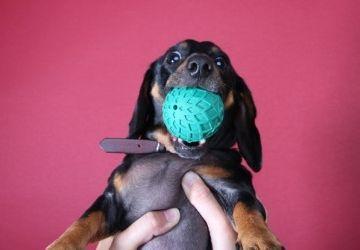 Img dispensadores alimentos perros art