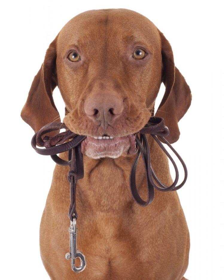 Img efecto lassie pasea perros beneficios1 art