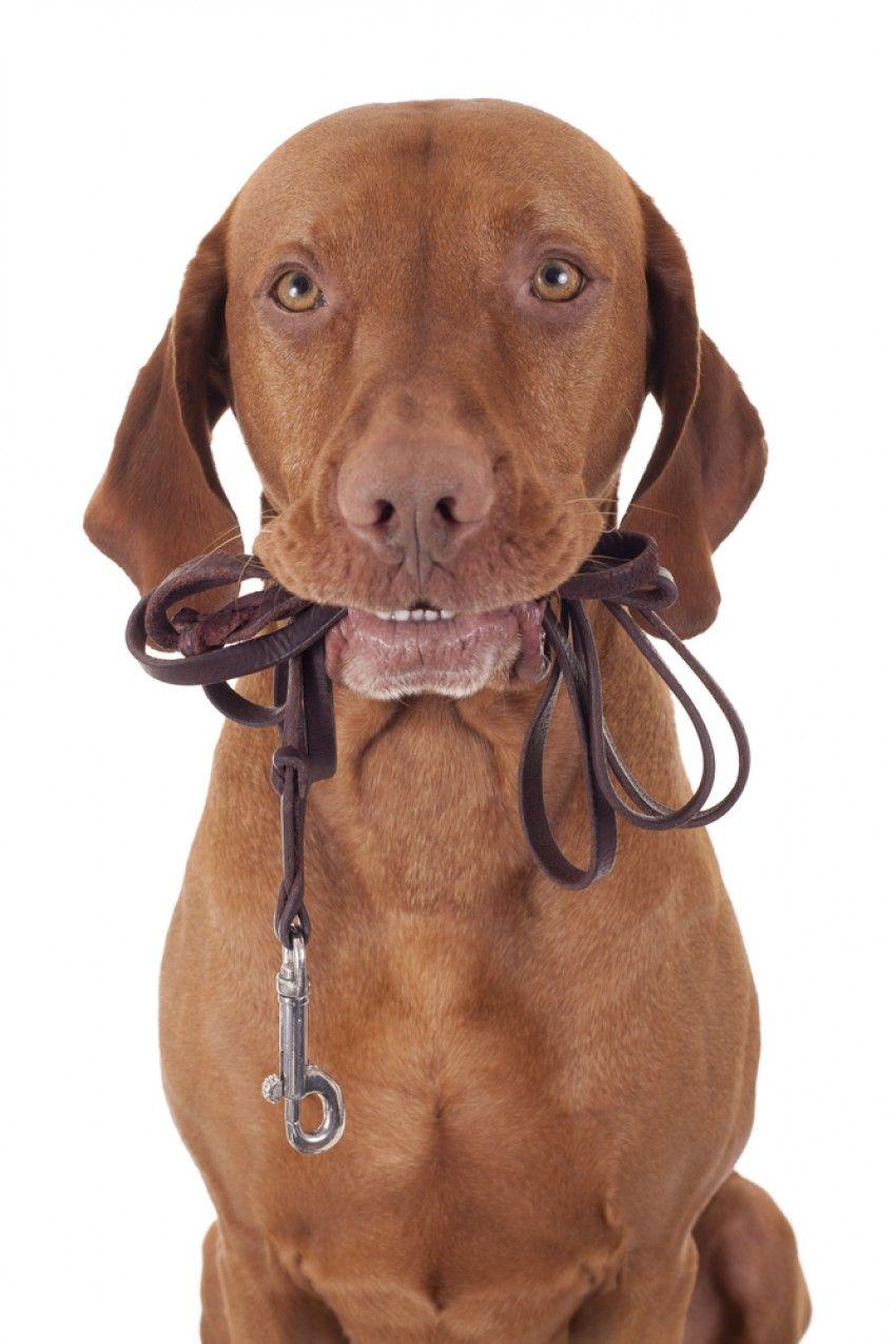 Img efecto lassie pasea perros beneficios1 portada