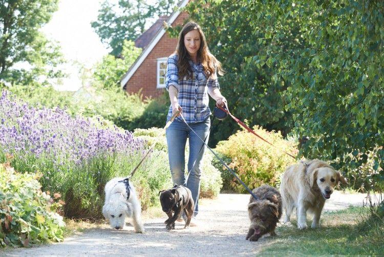 Img efecto lassie pasea perros beneficios3 art