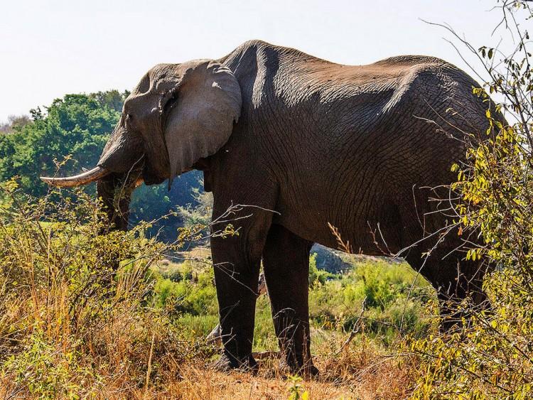 Img elefante custodia