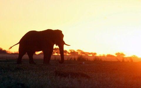 Img elefante