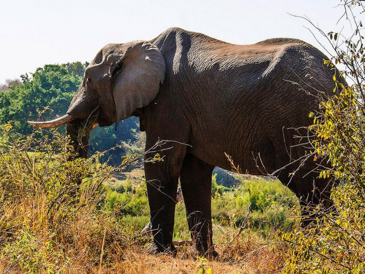 Img elefantes selva