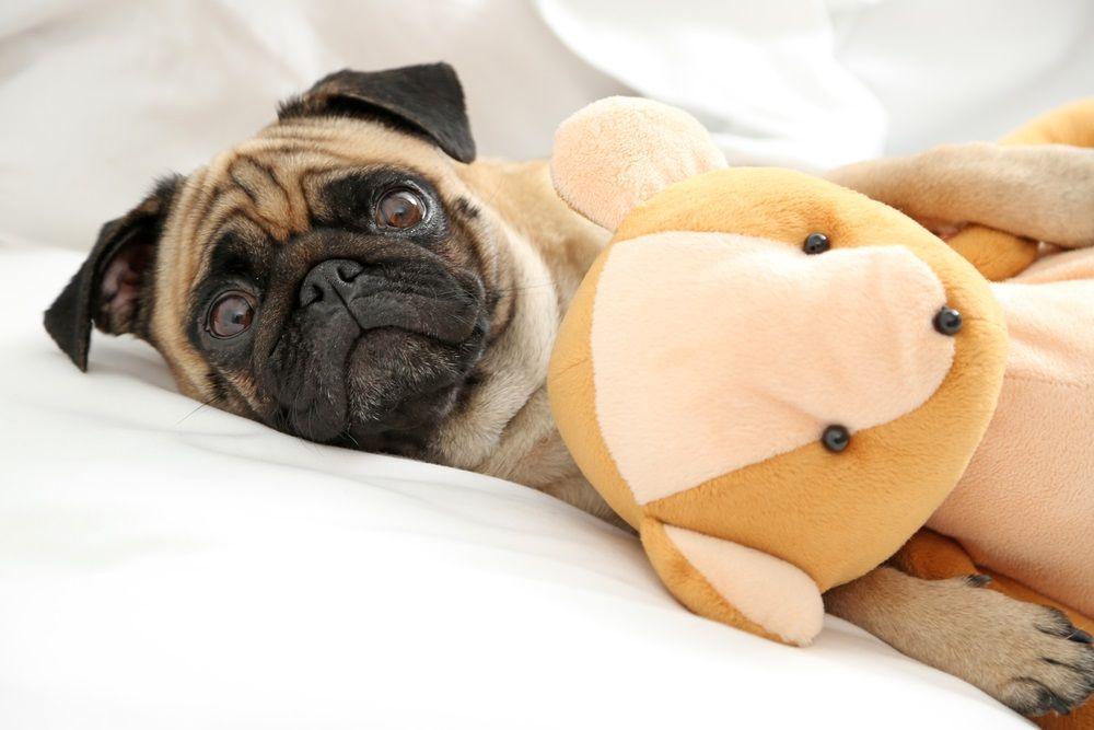 img_embarazo psicologico perros
