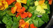 Img ensalada flores