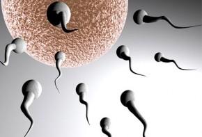 Img esperma calidad