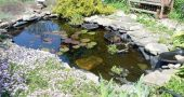 Img estanque