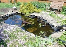Img estanque jardin art
