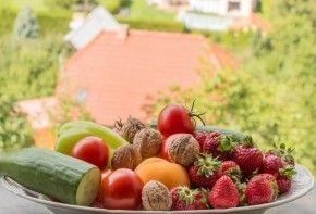 Img fibra vegetales
