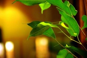 Img ficus plantas