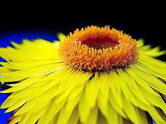 Img flor